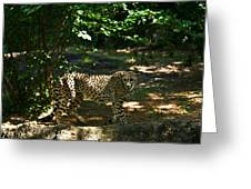 Cheetah On The In The Forest 2 Greeting Card