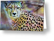 Cheetah Viii Greeting Card