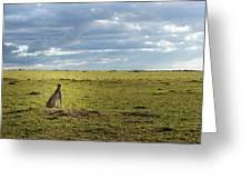Cheetah Watch Greeting Card