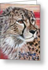 Blaa Kattproduksjoner       Cheetahs Face Greeting Card