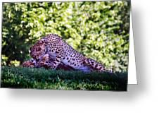 Cheetahs In Love Greeting Card