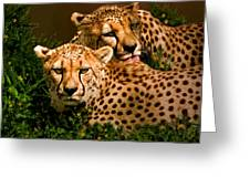 Cheetahs  Greeting Card by Thanh Thuy Nguyen