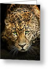 Cheetaro Greeting Card by Big Cat Rescue