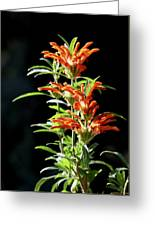 Cheeto Plant Portrait Greeting Card