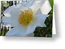 Cherokee Rose 1 Greeting Card