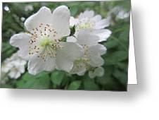 Cherokee Rose At The Farm Greeting Card