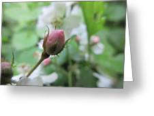 Cherokee Rose Of Dover Greeting Card