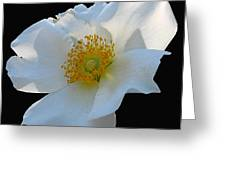 Cherokee Rose On Black Greeting Card
