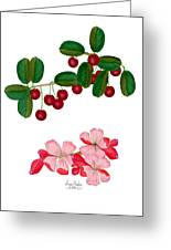 Cherries And Cherry Blossoms Greeting Card