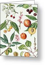 Cherries And Other Fruit-bearing Trees  Greeting Card