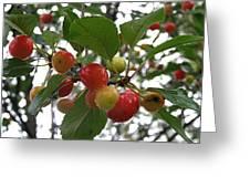 Cherries In The Morning Rain Greeting Card