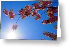 Cherries In The Sky Greeting Card