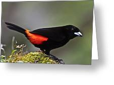 Cherrie's Tanager Greeting Card by Heiko Koehrer-Wagner