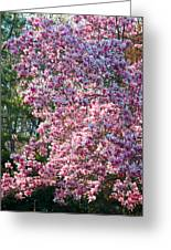 Cherry Blossom - 2 Greeting Card