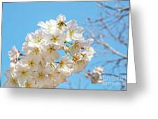 Cherry Blossom And A Bee Greeting Card