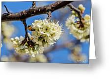 Pear Blossom And Bee Greeting Card