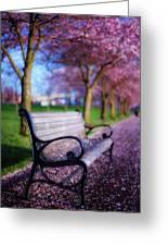 Cherry Blossom Bench Greeting Card