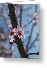 Cherry Blossom Branch Greeting Card