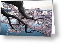 Cherry Blossom Breeze Greeting Card