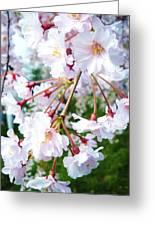 Cherry Blossom Closeup Greeting Card