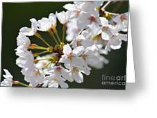 Cherry Blossom Cluster Greeting Card