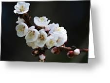 Apricot Blossom I Greeting Card