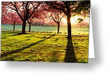 Cherry Blossom In A Park At Dawn Greeting Card