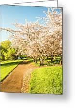 Cherry Blossom Lane Greeting Card