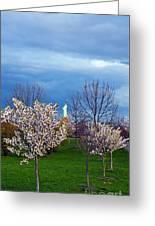 Cherry Blossom Liberatum Greeting Card
