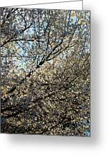 Cherry Blossom Greeting Card