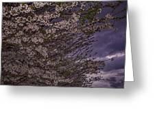 Cherry Blossom Sky Greeting Card