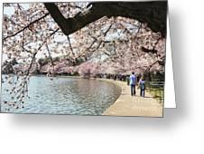 Cherry Blossom Stroll Around The Tidal Basin Greeting Card