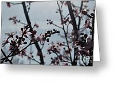 Cherry Blossom Transparency Greeting Card