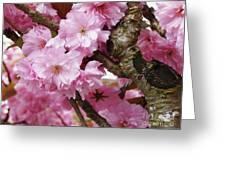 Cherry Blossom Tree Greeting Card