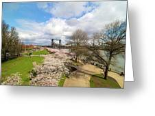 Cherry Blossom Trees At Portland Waterfront Greeting Card