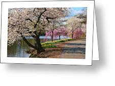 Cherry Blossom Trees Of Branch Brook Park 17 Greeting Card