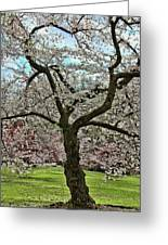 Cherry Blossom Trees Of Branch Brook Park 31 Greeting Card