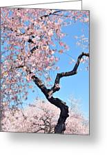 Cherry Blossom Trilogy II Greeting Card