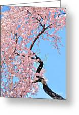 Cherry Blossom Trilogy IIi Greeting Card