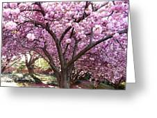 Cherry Blossom Wonder Greeting Card