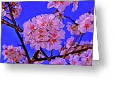Cherry Blossoms 004 Greeting Card