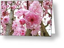 Cherry Blossoms Art Prints 12 Cherry Tree Blossoms Artwork Nature Art Spring Greeting Card