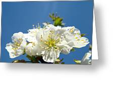 Cherry Blossoms Art White Spring Tree Blossom Baslee Troutman Greeting Card