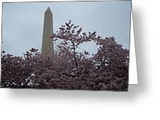 Cherry Blossoms At The Washington Monument Greeting Card