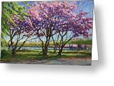 Cherry Blossoms, Central Park Greeting Card