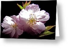 Cherry Blossoms Greeting Card by Debra     Vatalaro