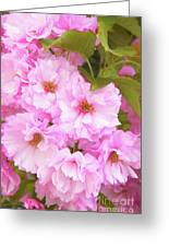 Cherry Blossoms I  Greeting Card