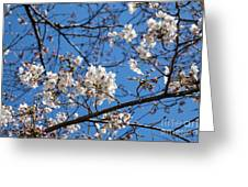 Cherry Blossoms In Hiroshima Greeting Card