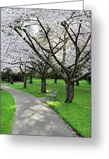 Cherry Blossoms In Stanley Park Vancouver Greeting Card