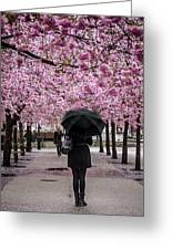 Cherry Blossoms In The Rain Greeting Card